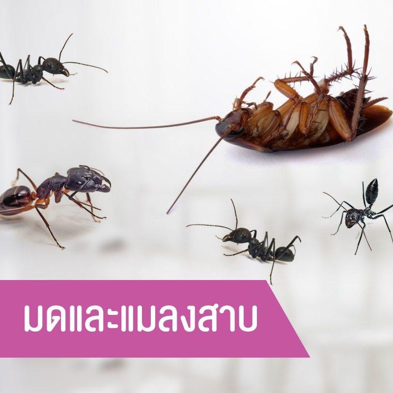 มดและแมลงสาบ