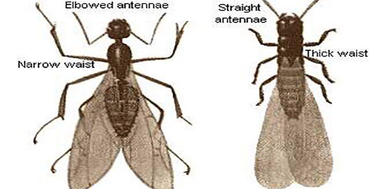 กำจัดมดและแมลงสาบโดยวางเจล